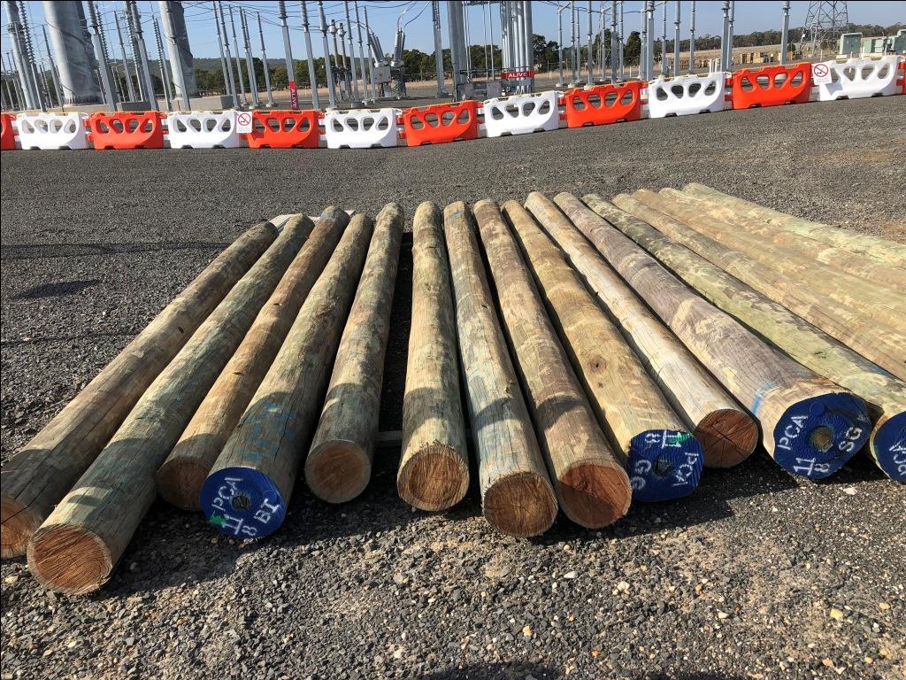 Driven timber piles